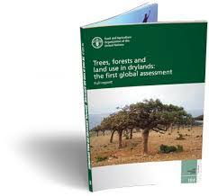 "What We Are Reading Today; ""Useful Trees and Shrubs in Eritrea"""